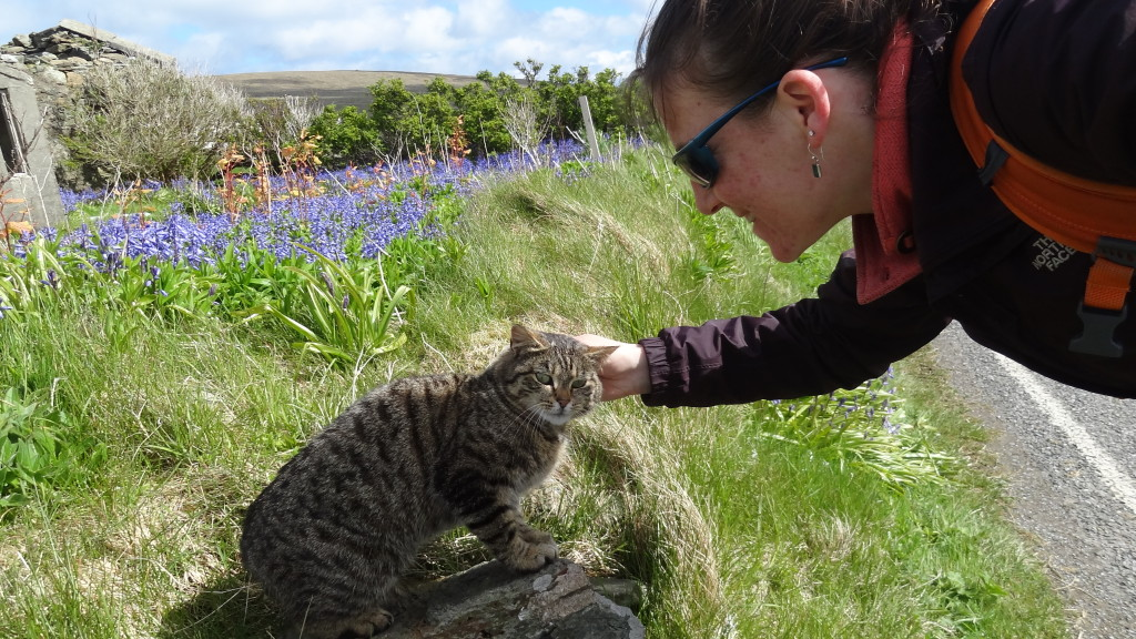 Petting a cat, blue flowers in the background
