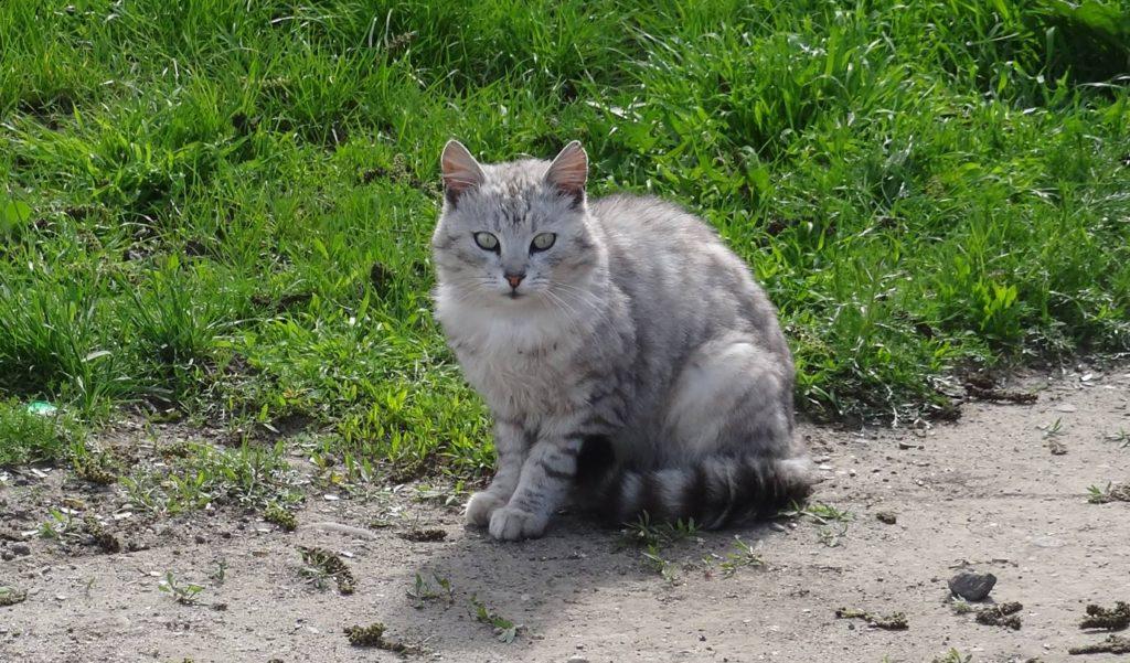 Cutest little stray cat in Soroca