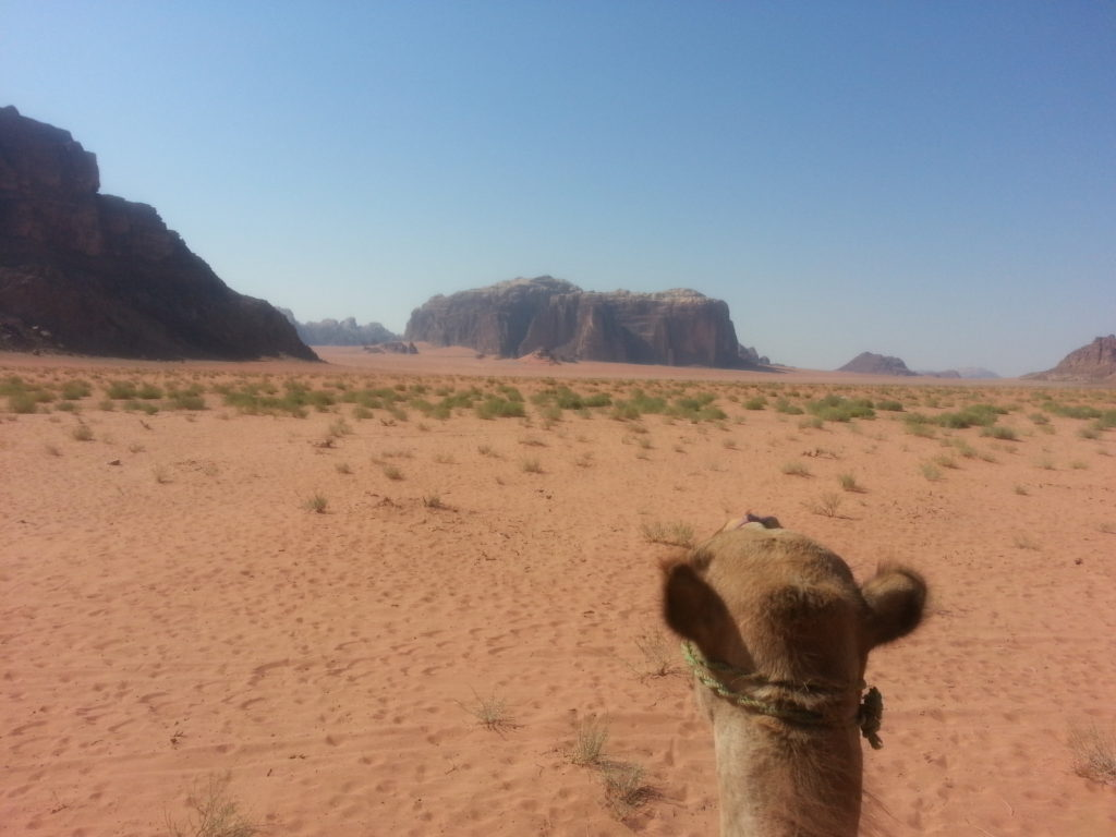 Camel ride through the Wadi