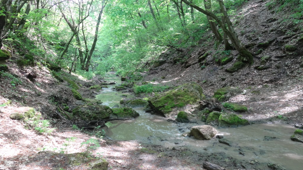Murky river to cross